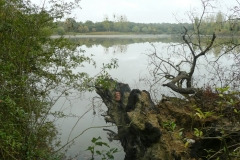 2ème étang